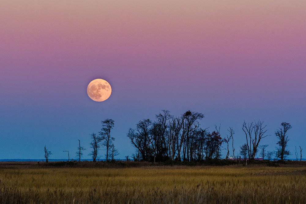 Moon over a field in Delaware by Abby Shepard